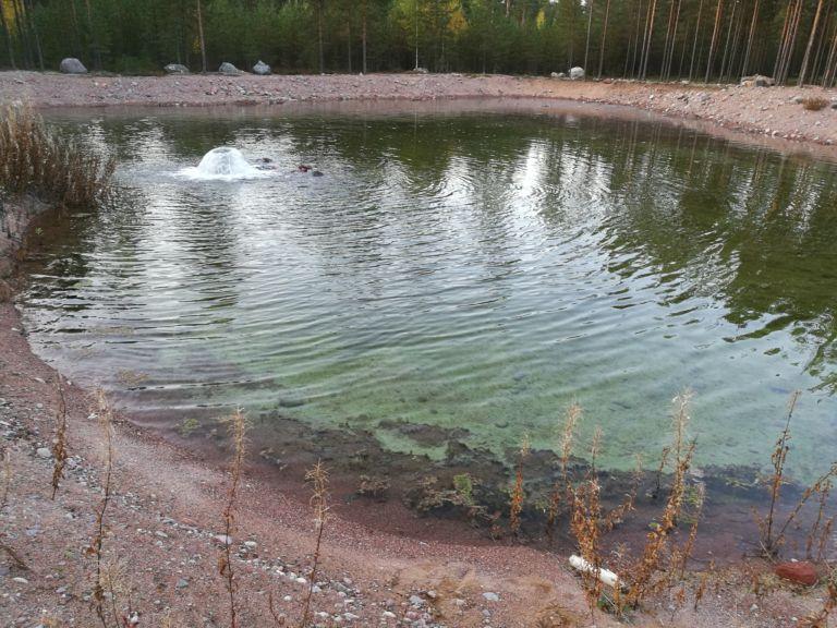 Imeytysaltaiden orgaaninen aines puhdistaa niihin pumpattavaa vettä.