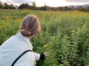 Kukkia saa katsoa ja poimia. Kuva: Juulia Rikala