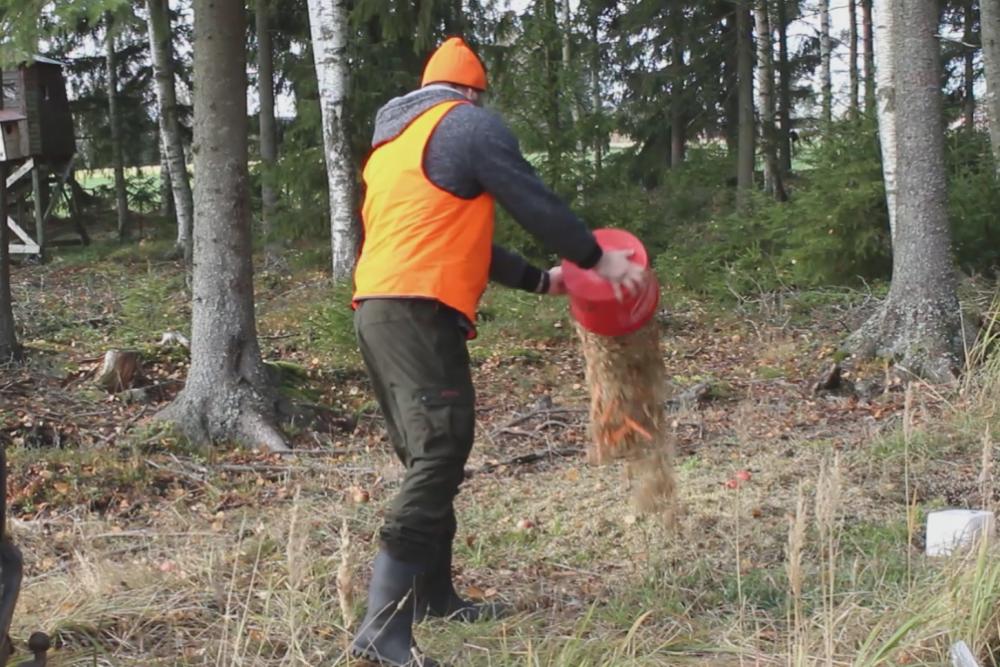 Mies kaataa ämpäristä porkkanoita ja viljaa ruokintapaikalle. Miehellä on huomioliivi päällään ja saappaat jalassaan.