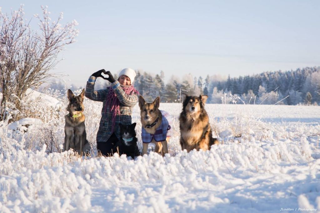 Koirien Määrä Suomessa